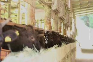石川はちみつ牛|有限会社鈴木畜産|ISHIKAWA HONEY BEEF